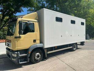 MAN Pferdetransporter horse truck